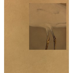 Daniel Shea - 43-35 10th Street (Kodoji Press, 2018)