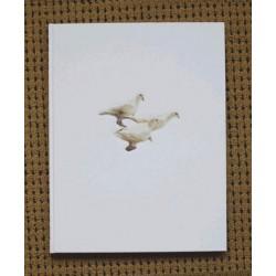 Carolyn Drake - Wild Pigeon (Auto-publié, 2014)