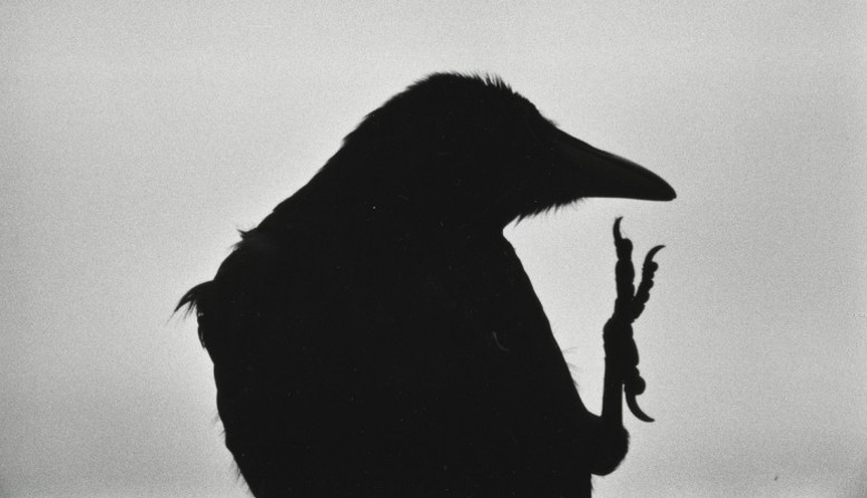 Ravens - a classic among the classics by Masahisa Fukase